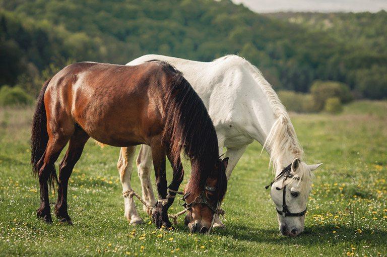 Reservar rutas a caballo por Asturias. Los Cauces MultiAventura.