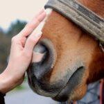 Beneficios de montar a caballo - Los Cauces MultiAventura