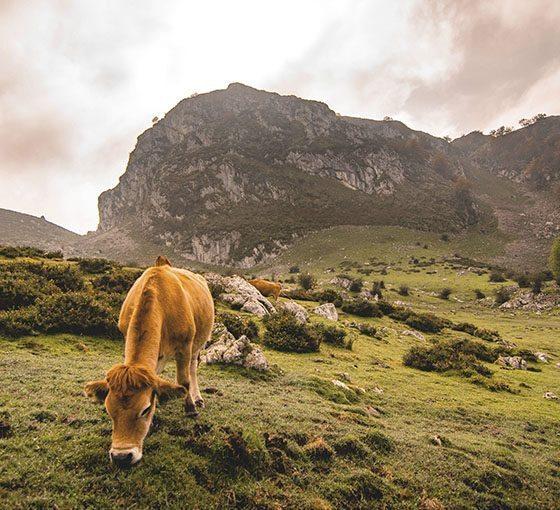 El día de Asturias con Los Cauces MultiAventura